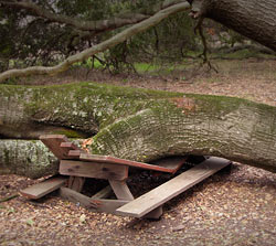Picnic table crushed by tree